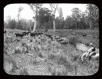 Gloucester River - Image: Dairy farming (3575073592)
