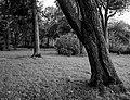 Danvikens kyrkogård 1.jpg