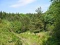 Deborah Plantation - geograph.org.uk - 182773.jpg