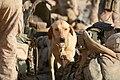 Defense.gov photo essay 090702-M-8866B-073.jpg
