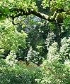 Den of Airlie - geograph.org.uk - 1387861.jpg