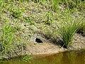 Den of unknown animal.JPG