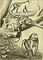 Der Mensch, sein Ursprung und seine Entwicklung, in gemeinverständlicher Darstellung (1911) (20242253613).jpg