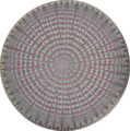 Diatom 1.png
