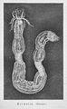Die Gartenlaube (1863) b 364.jpg