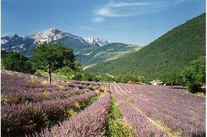 Dauphiné - Provençal Drôme