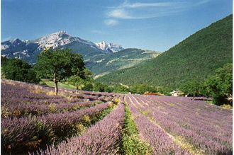 Drôme - Image: Dielavan