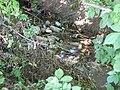 Dirty Stream in Strahilovo - panoramio.jpg