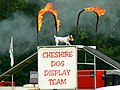 Dog display team (3 of 3) Cirencester Park, Gloucestershire - geograph.org.uk - 2489770.jpg