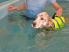 Dog on underwater treadmill.jpg