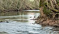 Dourdou River near Nauviale 03.jpg