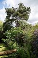 Drainage channel rhus, scots pine and willowherb at Plucks Gutter Kent England.jpg