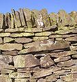 Dry stone wall 02.JPG