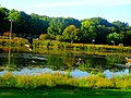 Ducks in Vilas Park - panoramio (2).jpg