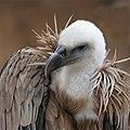 Eagle bokeh II.jpg