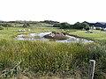 Eco pond near Louisburgh - geograph.org.uk - 1394317.jpg