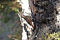 El Chalten-Sendero Salto del Chorrillo (39263514622).jpg
