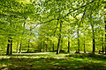 England - English Summer Woods (7183006498).jpg
