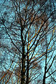 Epping Forest High Beach Waltham Abbey Essex England - trees 05.jpg