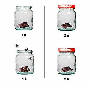 Esperimento di Francesco Redi sull'abiogenesi. Un pezzetto di carne è inserito in un barattolo in vetro, nel barattolo aperto (1a e 1b) si ha comparsa di larve e mosche, mentre nel barattolo chiuso (2a e 2b) non si formano né mosche né larve).