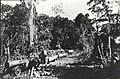 Estrada de ferro da fazenda de Henrique Dumont, próximo de Ribeirão Preto - 1-13839-0000-0000, Acervo do Museu Paulista da USP.jpg