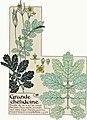 Etude de la plante - p.309 fig.358 - Chélidoine.jpg