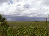 Everglades storm.JPG