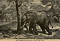 Explorations and adventures in the wilds of Africa; (1909) (14577206468).jpg