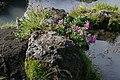 Eyraros vid Detifoss0205 - Flickr - Ragnhild & Neil Crawford.jpg