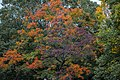 Fall colors 03 - Lake View Cemetery - 2015-10-12 (22264298236).jpg
