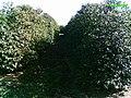 Fazenda boa Vista - São Gonçalo do Sapucaí-mg - panoramio.jpg