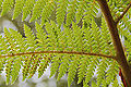 Fern leaves.jpg