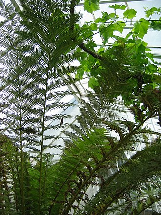Inveresk Lodge Garden - Image: Ferns 01