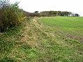 Field near Nesbitt Hall - geograph.org.uk - 279021.jpg