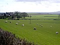 Fields at Pierbanks - geograph.org.uk - 354795.jpg