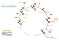 Fijación de dioxido de carbono.pdf