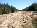 Firebreak and fenceline in the forest - geograph.org.uk - 1804600.jpg
