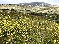 Fleurs sauvages, Col de la Gineste.jpg