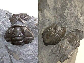 Scienze della vita che risalgono alla chiave di risposta attività fossili record