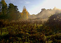 Flickr - Per Ola Wiberg ~ mostly away - Early morning mist, october 8.jpg