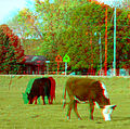 Flickr - jimf0390 - JimF 05-01-10-0004a natures lawn mowers.jpg