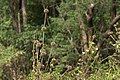 Flora from siruvani IMG 3873.jpg