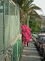 Flores en la puerta - panoramio.jpg
