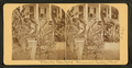 Florida door yard, banana and Century plant, from Robert N. Dennis collection of stereoscopic views 3.png
