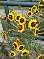 Flors als jardins del Parque de las Musas de Chiclayo02.jpg