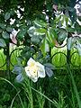 Flower92.jpg