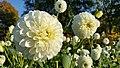 Flower (22114115505).jpg