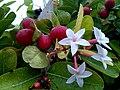 Flower 20160719 155942.jpg
