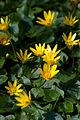 Flowers (2424914609).jpg