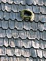 Folk Museum, Roof shingles 05 (2477539879).jpg
